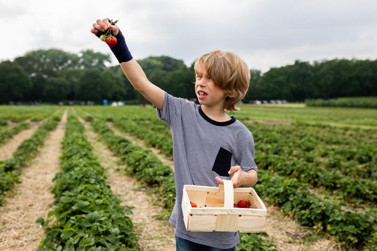 Familienreportage. Junge mit einem Korb auf einem Erdbeerfeld.