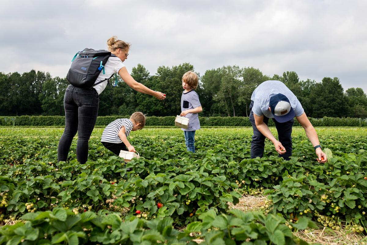 Familienreportage. Familie auf einem Erdbeerfeld.