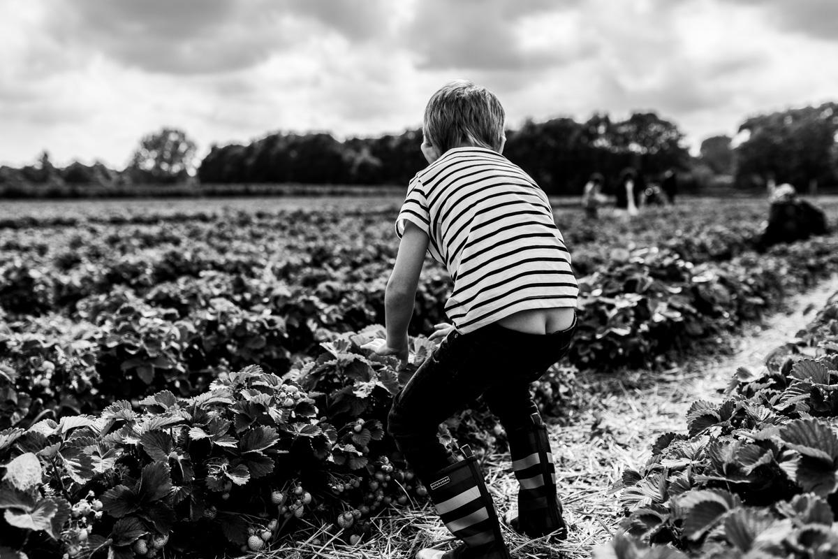 Junge im Erdbeerfeld
