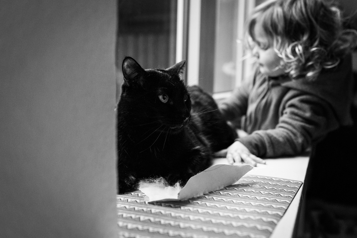 Eine Katze auf dem Fensterbrett, im Hintergrund ein Mädchen